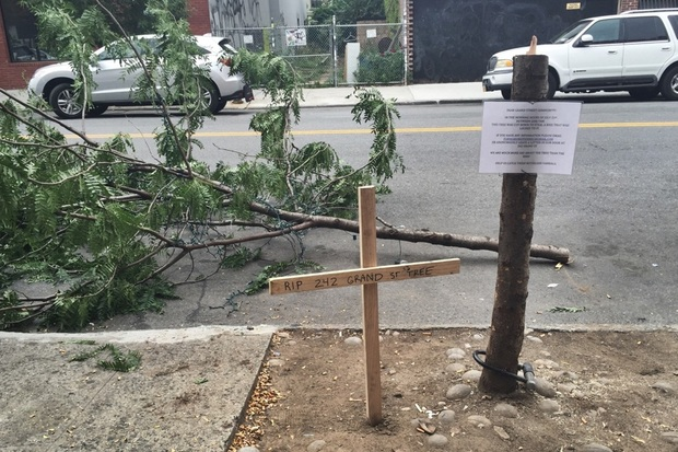 The bicycle, which was just a few hundred dollars, was less of a loss than the tree, locals said.