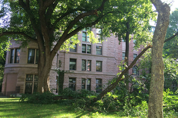 A large branch snapped off a tree outside the museum Friday morning.