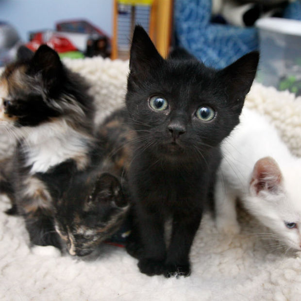 Where To Adopt A Cat In Brooklyn