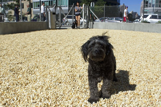 The new dog park has benches, a doggie water fountain and a poop bag dispenser.