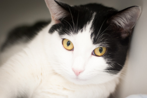 City animal shelters are still full of cats brought in during the busy summer season.