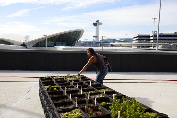 The farm, which will grow potatoes, beets and herbs, will be located just outside Terminal 5.