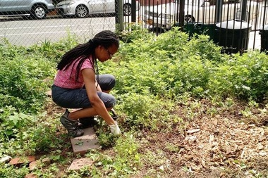 A gardener at the Maple Street Community Garden works in the green space in May. State Sen. Jesse Hamilton of Prospect-Lefferts Gardens has introduced legislation to seize the property through the use of eminent domain.