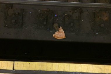 Reddit user Bebedvd captured another pizza rat in the Union Square subway station.