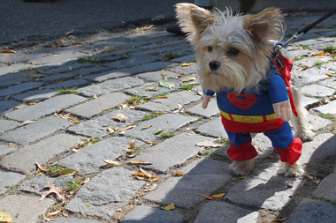 cnn calls the tompkins square park halloween dog parade - Halloween Parade East Village
