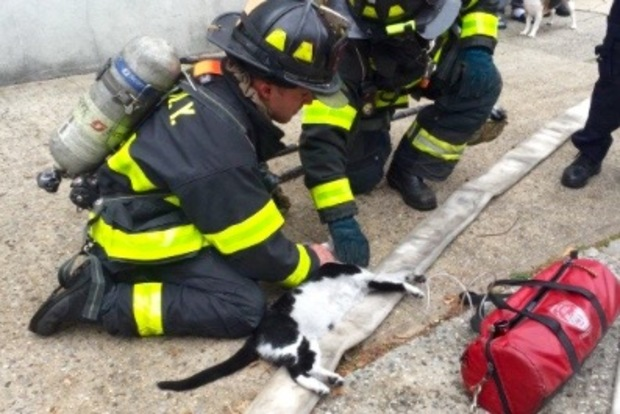 Police officers and firefighters responding to a fire in Glendale gave CPR to a cat rescued from a burning building.