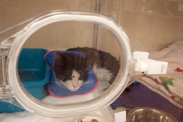 Kit Kat is currently being treated in a special oxygen chamber.
