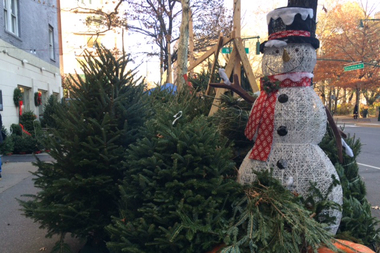 Turn Your Christmas Tree Into Mulch This Weekend in ...