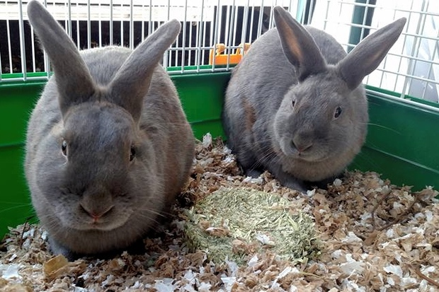 Police rescued the rabbits from a Gowanus backyard and now they need new homes.