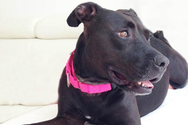 The ASPCA is looking for a forever home for Guadalupe.