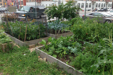 A total of 34 temporary gardens will be protected under NYC Parks, according to officials, including 15 that were at-risk for development, an advocacy group said. Tranquility Farm in Bedford-Stuyvesant is among the gardens on the list, according to organization 596 Acres.