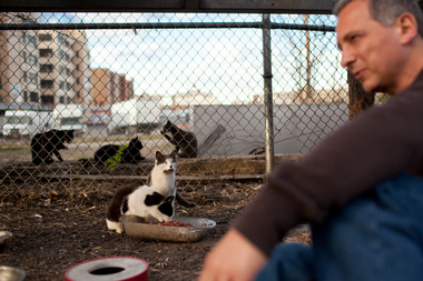 Joe Tortora waits as feral cats eat and groom themselves near one of his colonies.