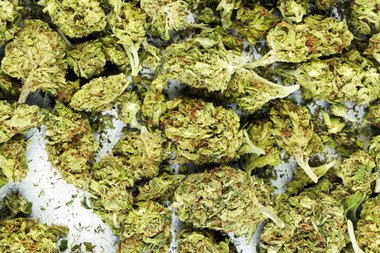 22 people were charged in a $15 million marijuana ring that brought the drug in from California to New York.
