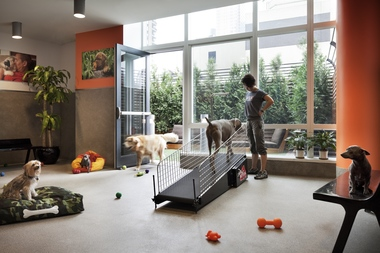 Nutrition and exercise are part of the regimen at Dog City located at Related Companies' MiMA luxury rental at 450 W. 42nd St. About 80 dogs in the building are members of the service, which includes day care and on-site vet services.