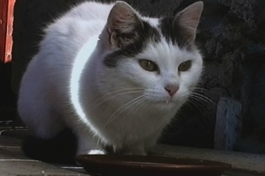 "This cat is the subject of ""Büsi (Kitty),"" an excerpt from a 96-hour video created by artists Peter Fischli and David Weiss."