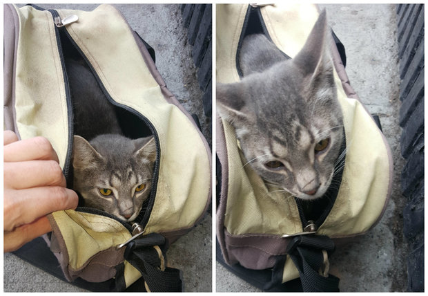 The kitty was found in a tool bag on 75th Street, according to its rescuer.
