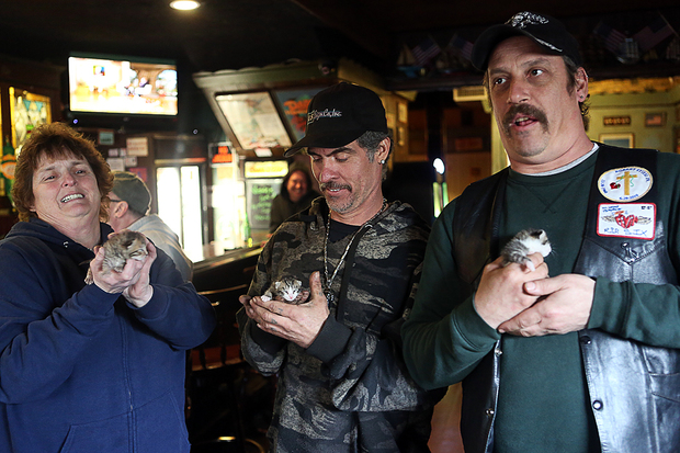 Donna Nielsen, 54, Junior Gomez, 43, and John Stieci, 47, hold the three rescued kittens inside the Windjammer bar during the Ridgewood watering hole's last day of operation.
