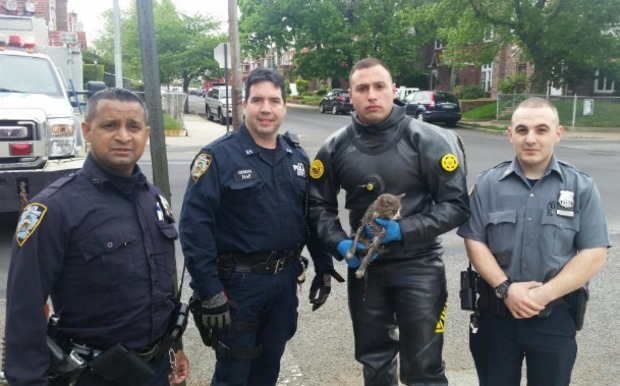 Police Rescue Cat From A Sewer Drain In Queens Queens