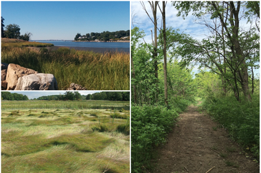 Three types of natural areas found in New York City (clockwise from upper left corner): wetlands in Alley Pond Park in Queens: forests in Marine Park in Brooklyn; and grasslands in Pelham Bay Park in the Bronx.