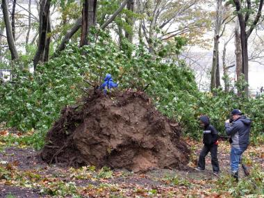 Hurricane Sandy uprooted massive trees and tore through Astoria Park.