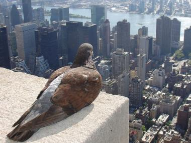 A pigeon perched up high looks down on the streets of Manhattan.
