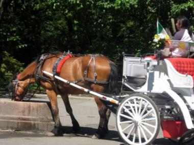 Central Park's horse-drawn carriages have been sidelined for 11 of 23 days during July, in order to avoid animal cruelty.