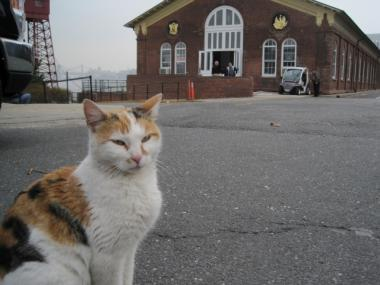 This friendly cat is already at home on Governors Island after apparently washing up there last weekend.