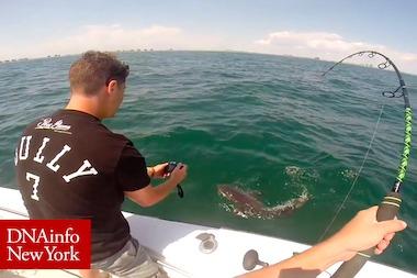 Video baby great white shark caught off rockaway beach rockaway video great white shark caught mile off rockaway beach publicscrutiny Gallery
