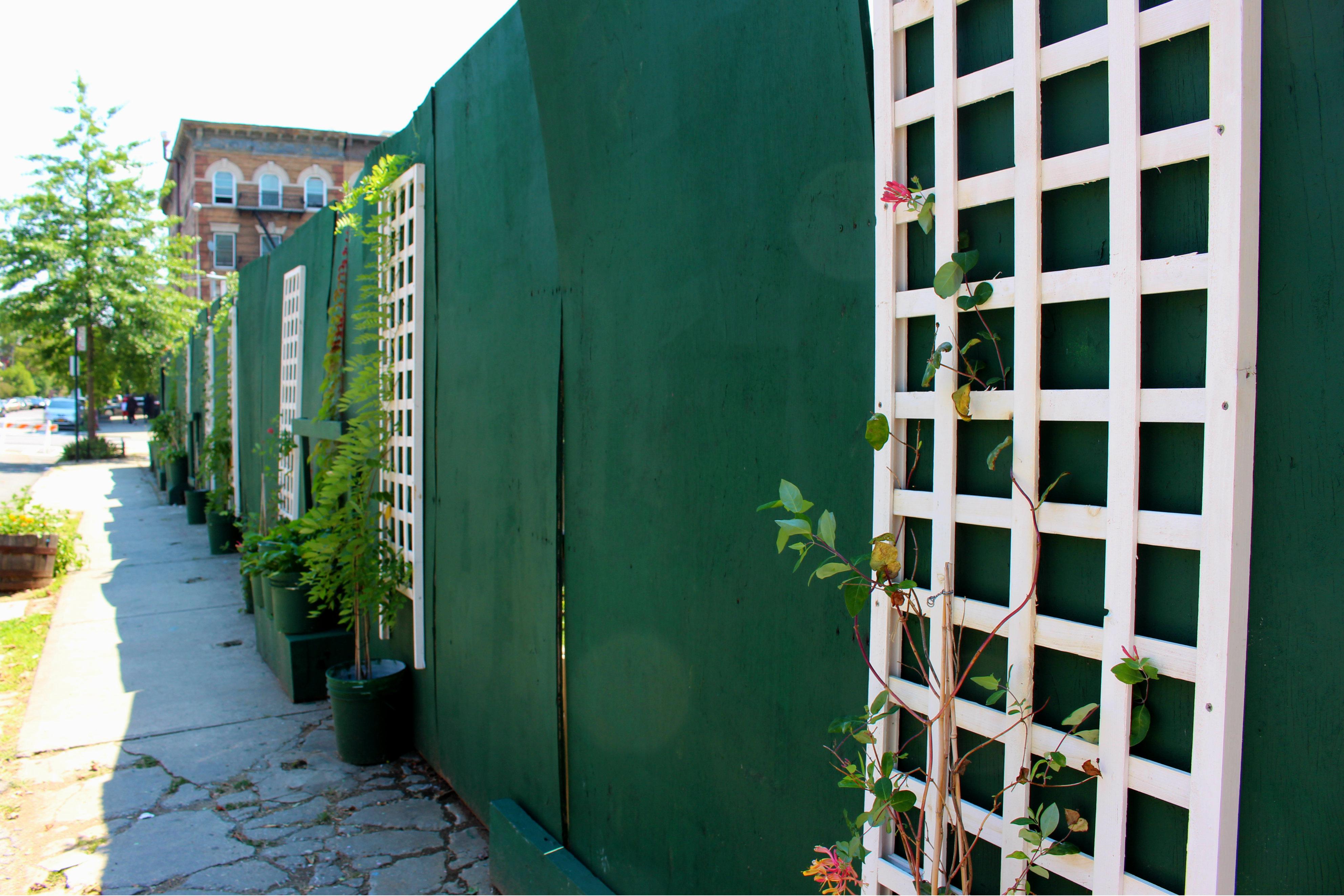 Greenest Block in Brooklyn 5