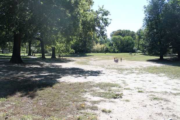 The Central Park Conservancy is renovating an area that has become dusty and dry due to improper irrigation.