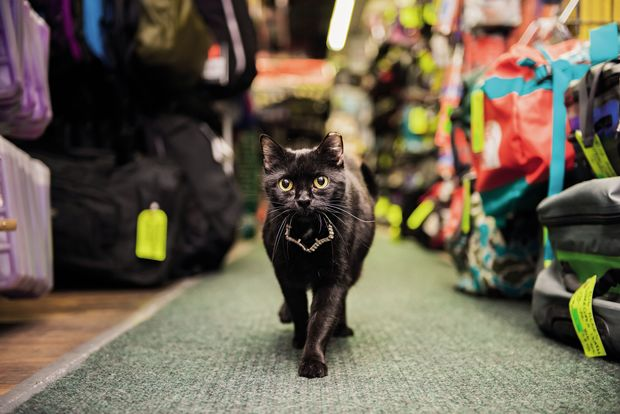 Andrew Marttila & PHOTOS: Welcome to a Whole World of Shop Cats Beyond the Bodega ...