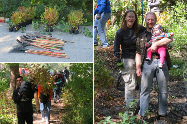 LaBagh Woods volunteers will plant the 1,000th native shrub over the past year on Sunday.