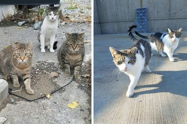 Some of the feral cats who live at the Bowery Bay Water Treatment Plant in Astoria.