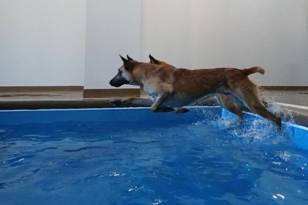 watch dogs swim their stress away at new pool for pups in. Black Bedroom Furniture Sets. Home Design Ideas
