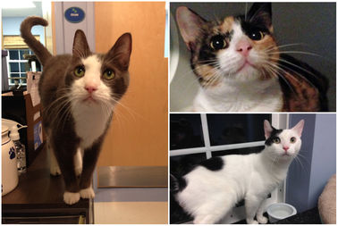 Chewy, Peppermint Patty and Stegosaurus are three cats up for adoption in Union Square this Sunday.