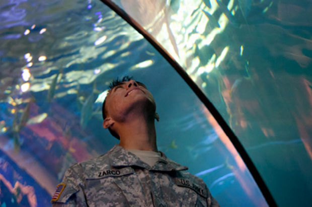 Shedd aquarium free to veterans friday unveils veteran 39 s Aquarium free days