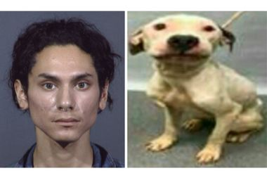 Lepe has been charged with aggravated cruelty to animals for helping dog owner Alec Litzinger toss his emaciated pit bull Diego in a dumpster.