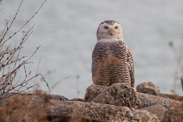 More than 250 birds have been recorded on Northerly Island.