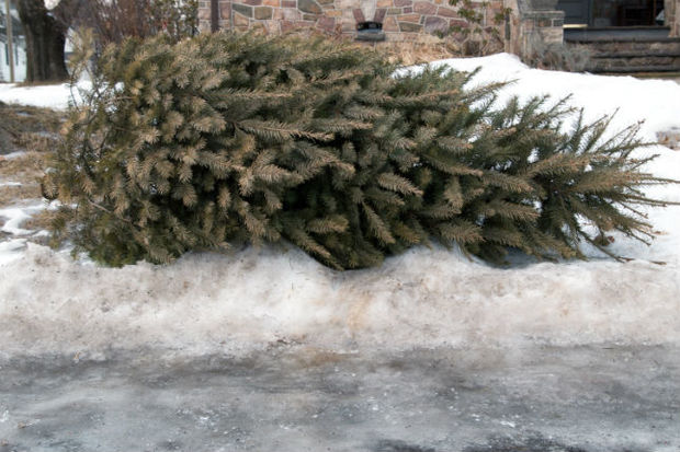 Nyc Christmas Tree Disposal