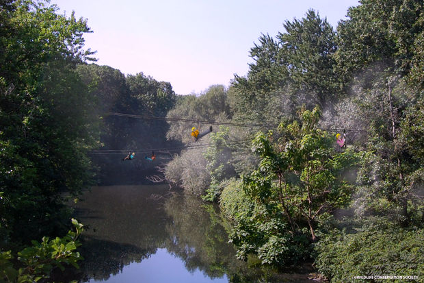 The Bronx Zoo said it plans to build zip line that criss-crosses the Bronx River
