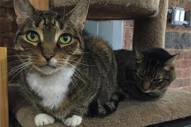 Prissy (at left), a 6-year-old gray tabby, was reunited with her boyfriend Bella (at right) after a dog dragged her out of Who's Your Doggy at 354 Myrtle Ave.