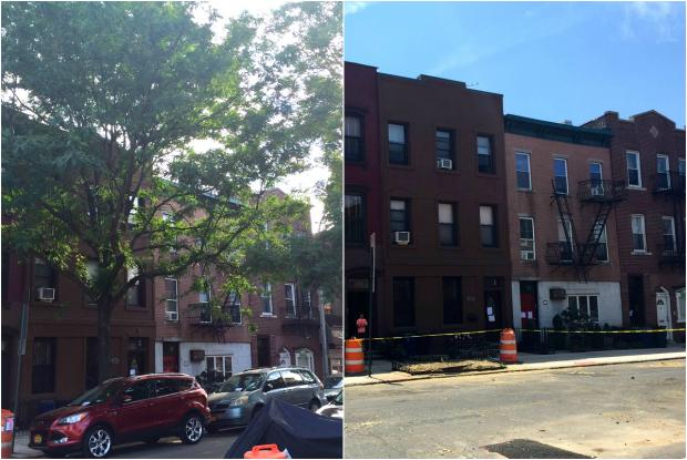 Residents on Carroll Street are mourning the loss of several trees that provided leafy shade on their Gowanus block.
