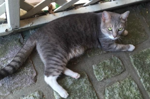 Pazzo the Cat has returned home to West 50th Street, and a stray cat named Romeo now has a home.
