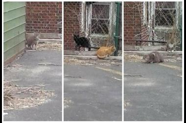 Some of the feral cats who live behind the Astoria Bank at 30th Avenue and 38th Street.