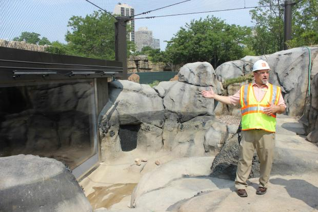 Dave Bernier, general curator at the zoo, stands in the new Penguin Cove before its opening last year.