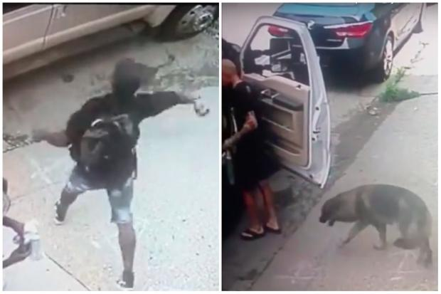 A group of burglars became unwitting heroes Monday when they broke into a truck to steal a laptop, potentially saving a German Shepherd sitting inside with the windows rolled up.