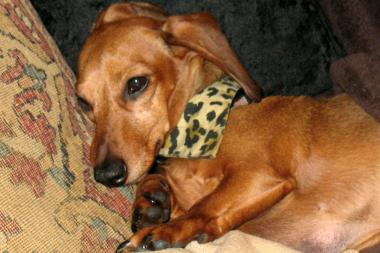 Winnie Pooh, a 6-year-old dachshund, was left $100,000 when her owner died in 2010. But six years later, the pooch and her caretaker have had little access to the money.
