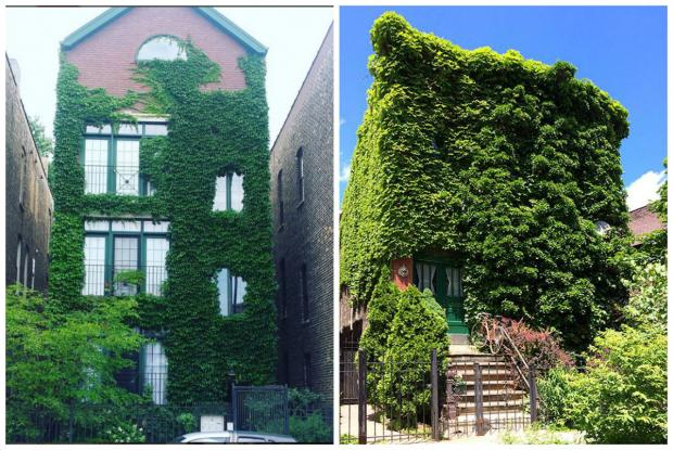 Ivy Enhanced Homes in WIcker Park