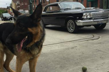 Trooper, a 5-year-old German Shepherd, lives at Emil's Body Shop.