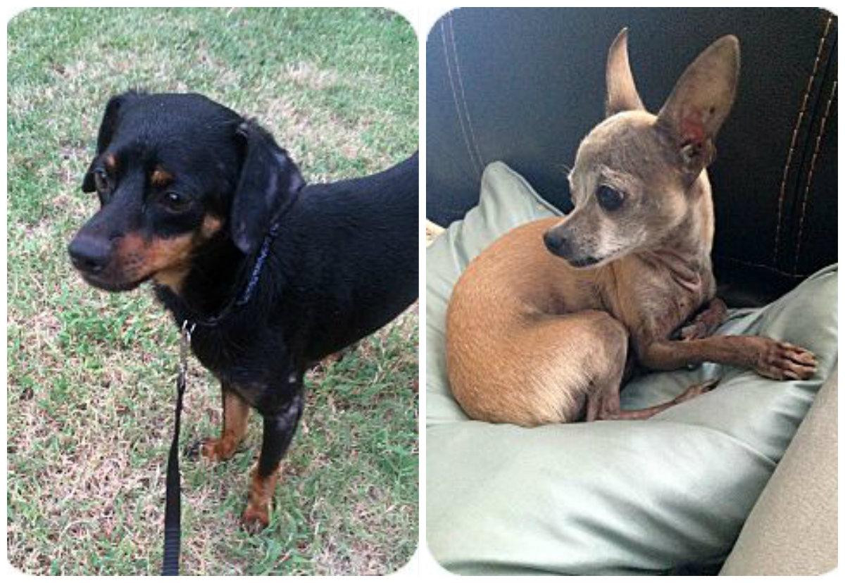 5 Adoptable Dogs Headed to Astoria This Weekend - Astoria ... - photo#9